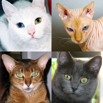Cats Quiz – Guess Photos of All Popular Cat Breeds 3.1.0 APK Free Download MOD for android